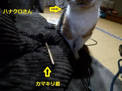 14mii1.jpg