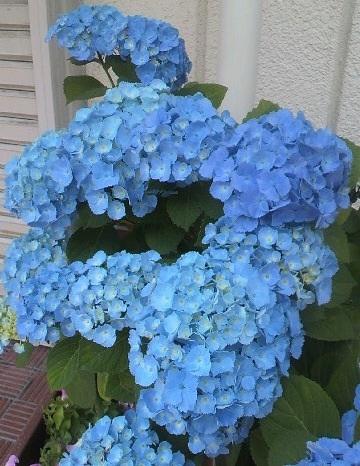 image_20130603150645.jpg