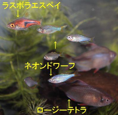 701 新入りネオンドワーフ 2