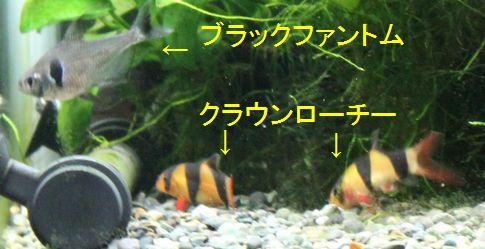 701 新入りネオンドワーフ 4