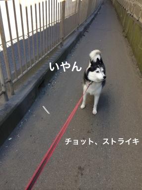IMG_0271_Fotor.jpg