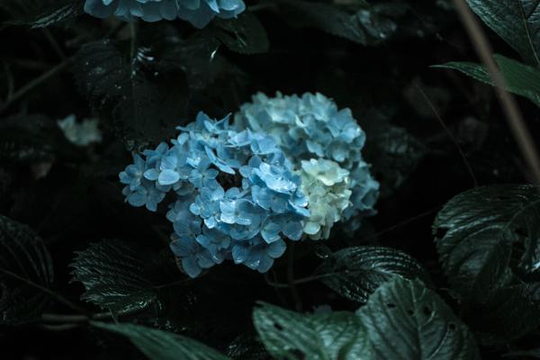 201308_kamiokasan_185.jpg