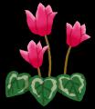 flower_cyclamen[1]