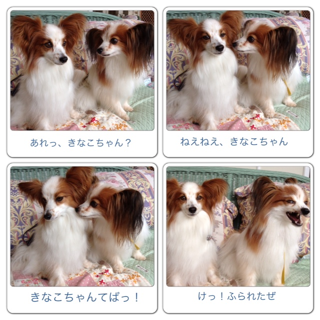 カイト君とヒルサイド4 2013/6/20