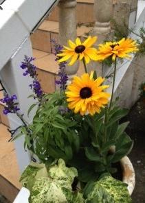 ヒルサイドのお花