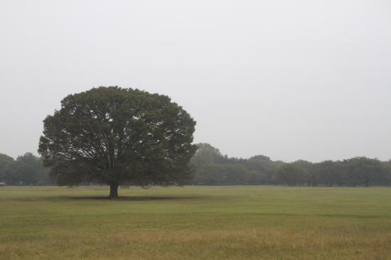 昭和記念公園2 10.12.2013