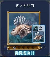 海洋生物ーミノカサゴ