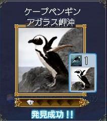 海洋生物ーケープペンギン