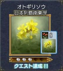 植物ーオトギリソウ