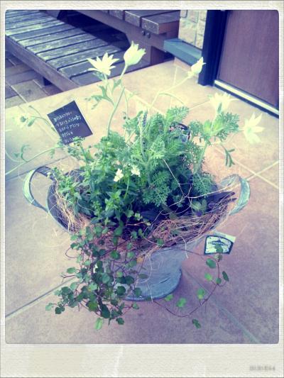 HanaGokoroさんの寄せ植えをお土産に…。