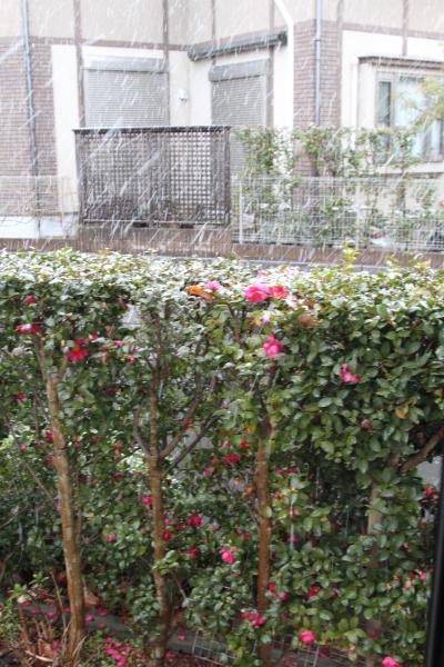 IMG_9924初雪初雪