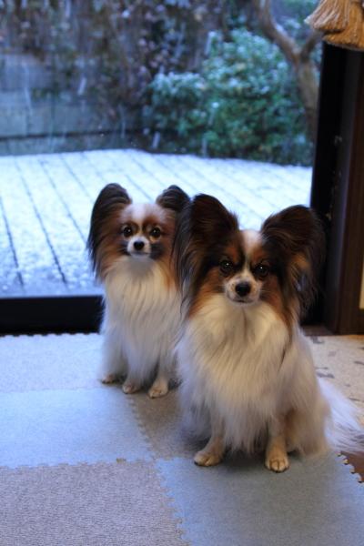 IMG_9936初雪初雪