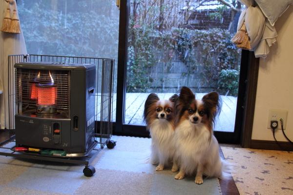IMG_9938初雪初雪