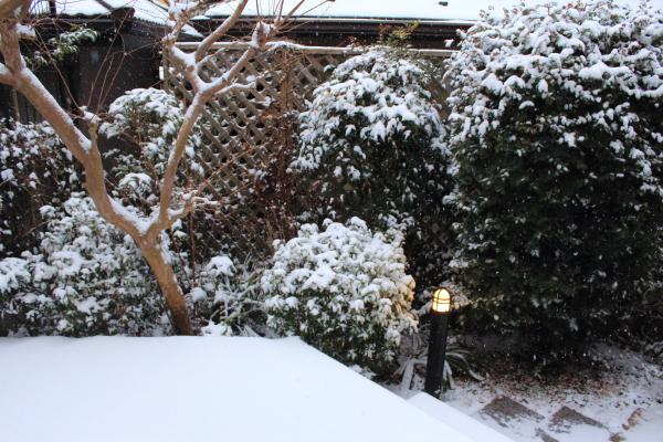 IMG_3143大雪大雪