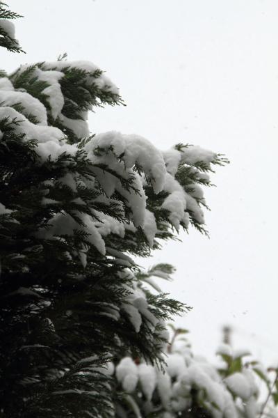 IMG_0112大雪大雪