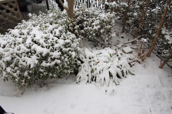 IMG_3157大雪大雪
