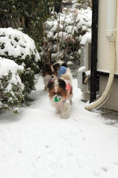 IMG_0150大雪大雪