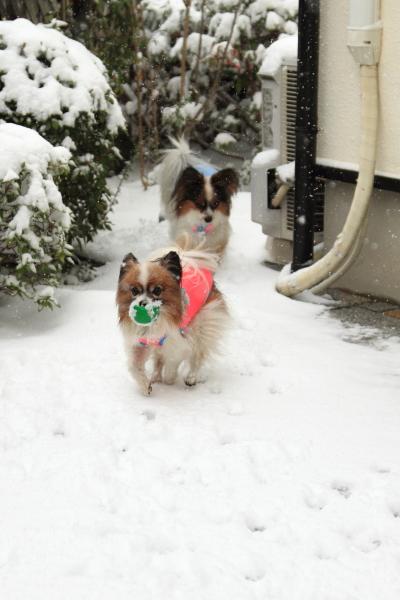 IMG_0153大雪大雪