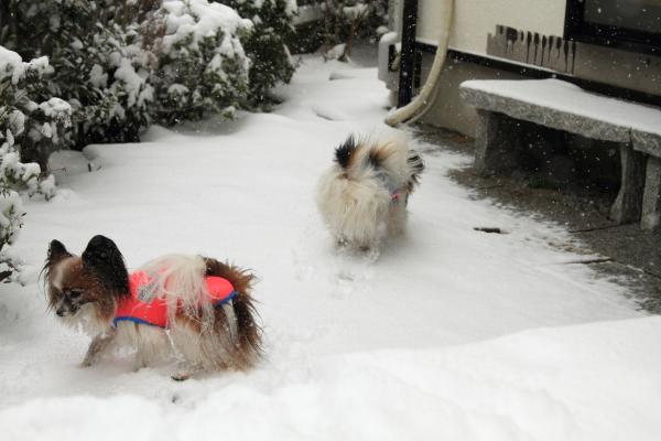 IMG_0140大雪大雪