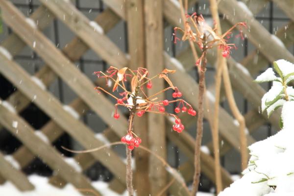 IMG_0106大雪大雪