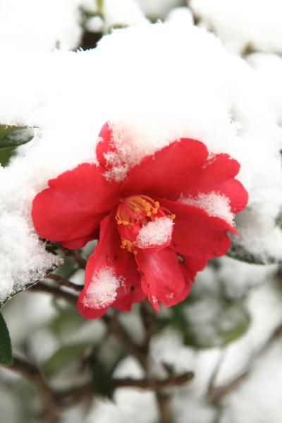 IMG_0111大雪大雪