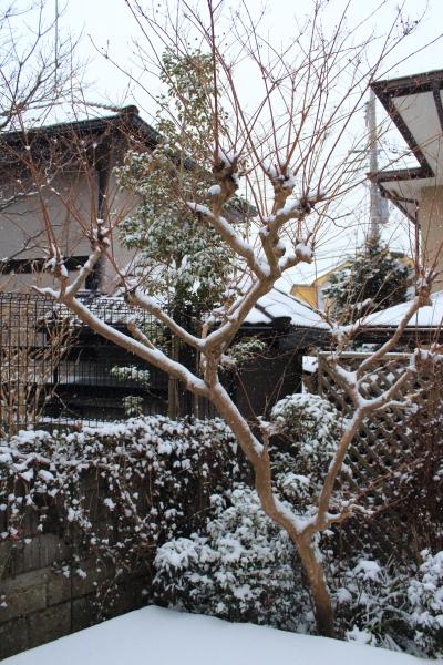 IMG_3145大雪大雪
