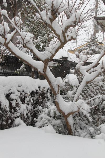 IMG_0165大雪 夜大雪 翌日