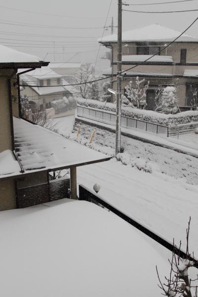 IMG_0168大雪 夜大雪 翌日