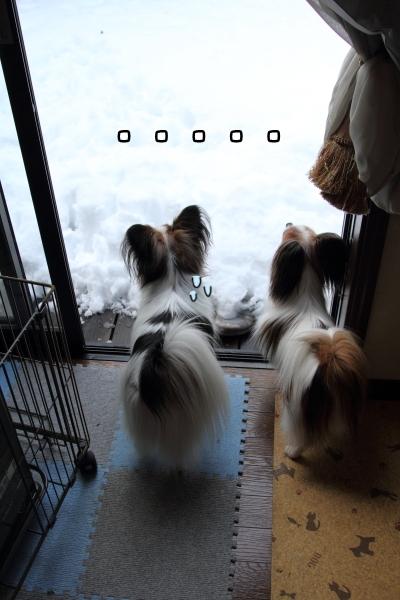 IMG_0203大雪 翌日大雪 翌日