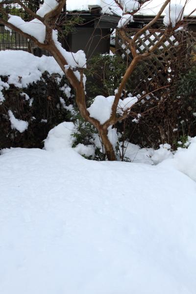 IMG_0204大雪 翌日大雪 翌日
