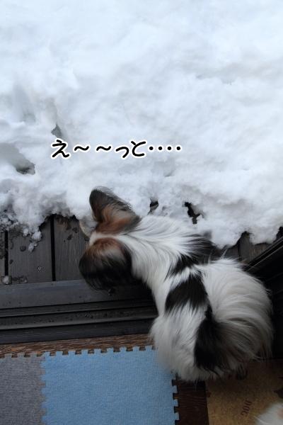 IMG_0205大雪 翌日大雪 翌日