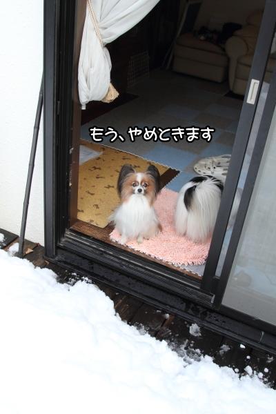 IMG_0213大雪 翌日大雪 翌日