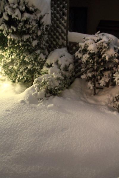 IMG_0233また大雪また大雪
