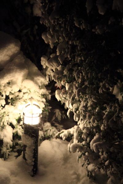 IMG_0234また大雪また大雪