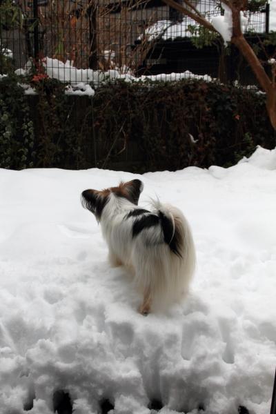 IMG_0246また大雪また大雪