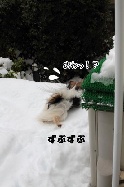 IMG_0250また大雪また大雪