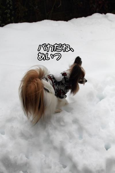 IMG_0251また大雪また大雪
