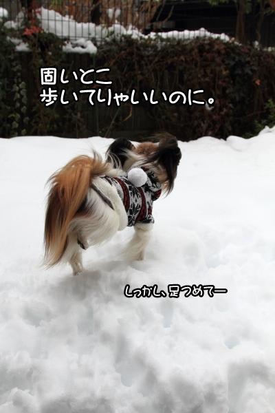 IMG_0252また大雪また大雪