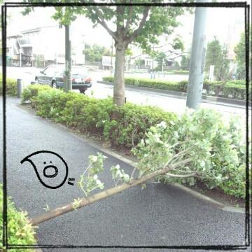 20130916_t1.jpg