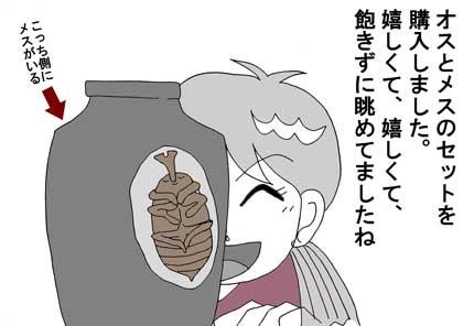 カブトムシ3