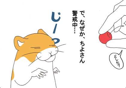 さくらんぼ6