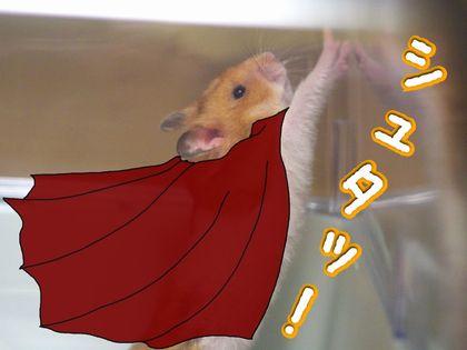 スーパーハム4