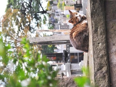 aaaaaahokekyocat20121114DSC_3470.jpg