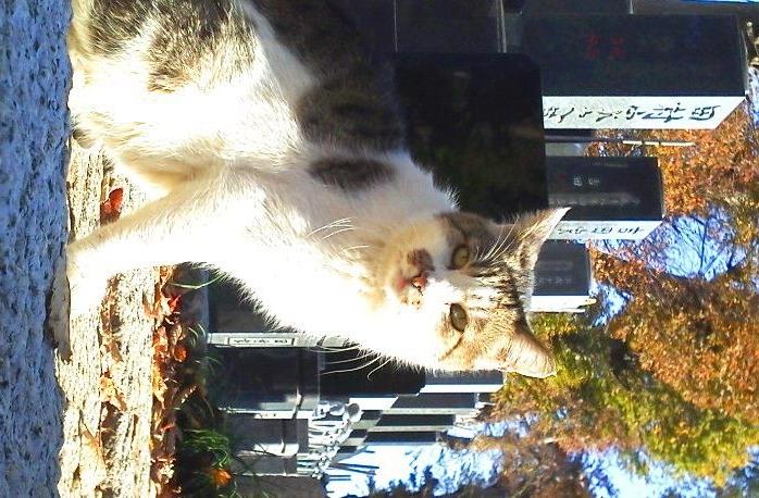hokekyocatwgravestones20121128.jpg