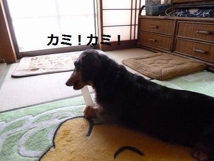 P1050325.jpg