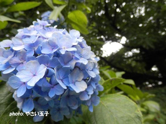 P7300132.jpg