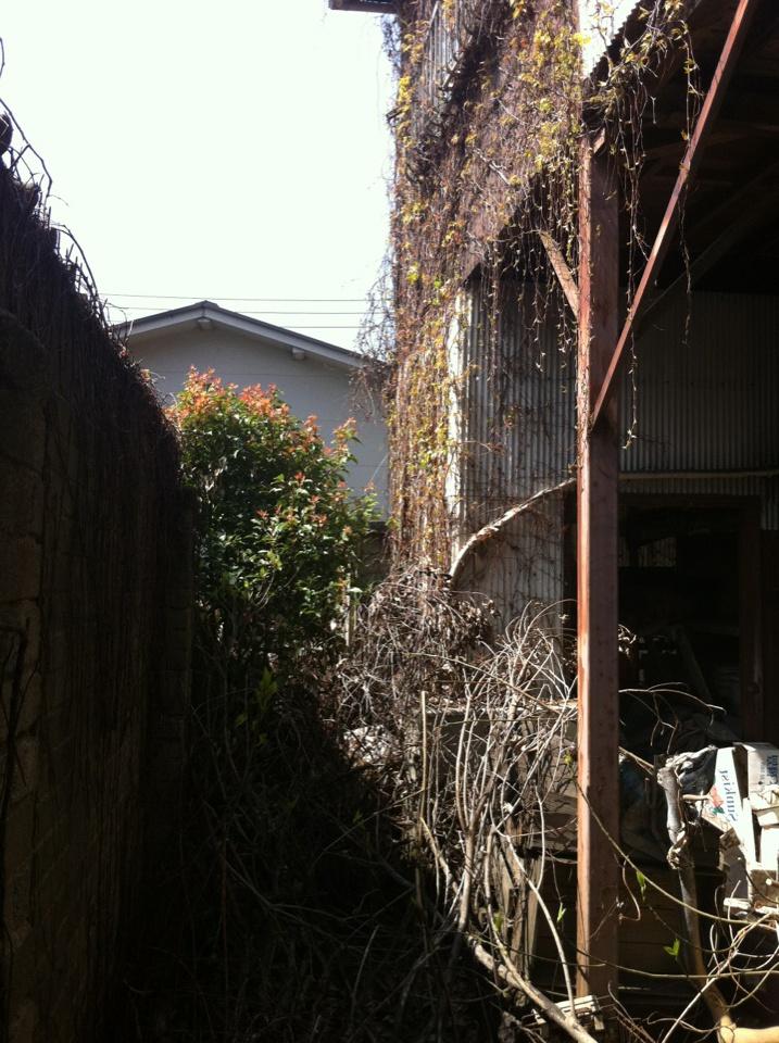 北九州 植木の伐採