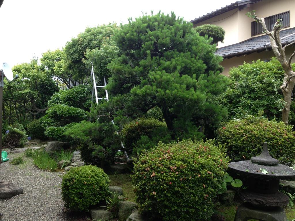 庭木の剪定 福岡市