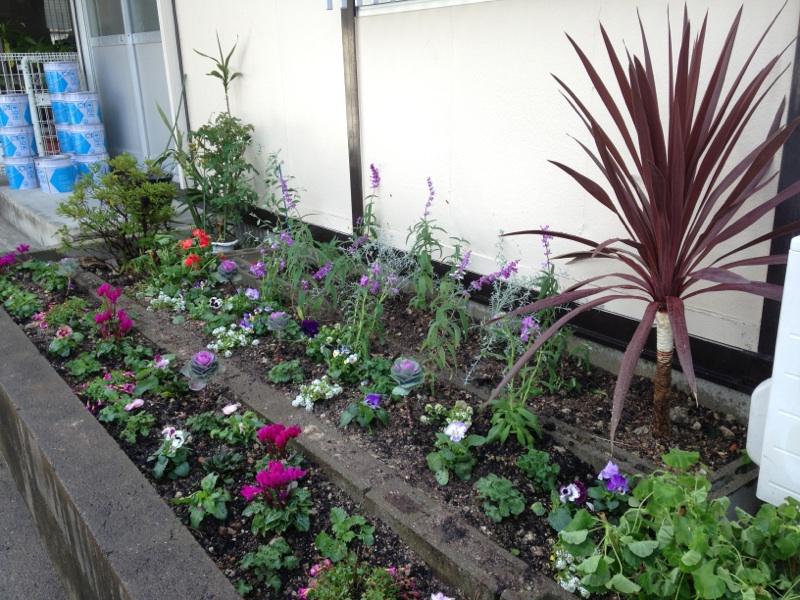花壇に花植え