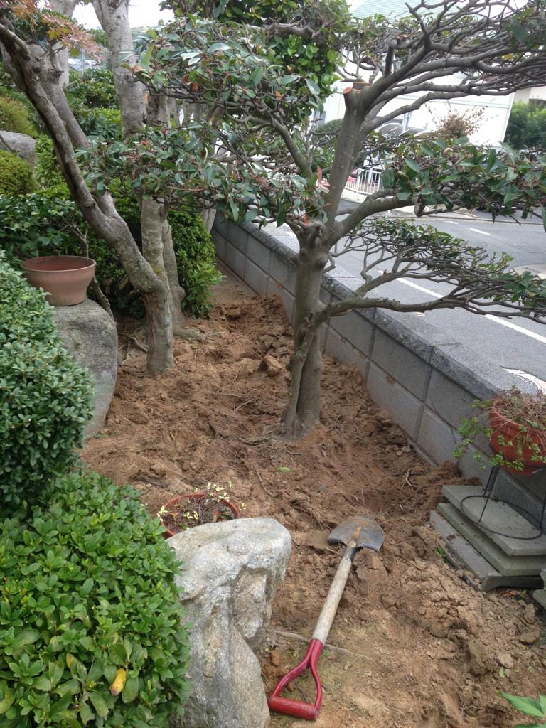 福岡 樹木 樹木伐採 剪定